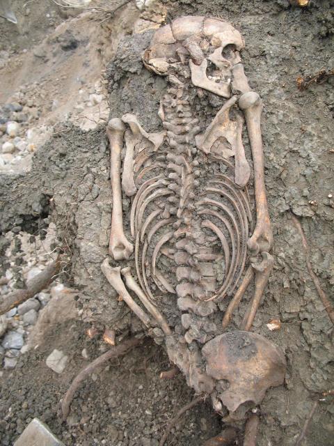 Hälften av invånarna i vikingatidens Sigtuna var invandrare