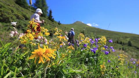 Wandernim Sommer, Blumenwiese, Davos-Klosters