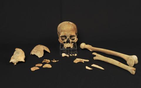 Skelettfragment från Hummervikholmen