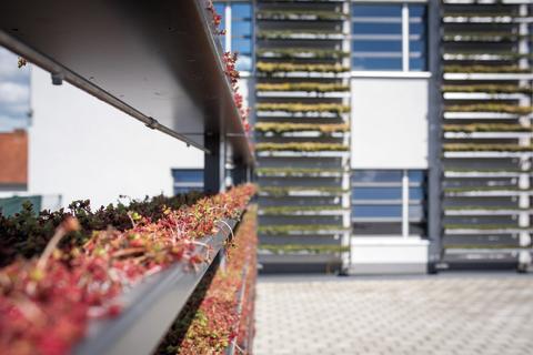 CityLam-Systembegrünung am EuroLam-Verwaltungsgebäude