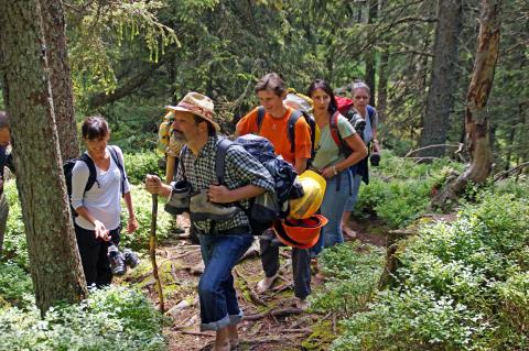 Waldaufstieg be einer Wanderung mit Markus Metzger