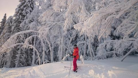 World-class skiing in Swedish Winter Wonderland