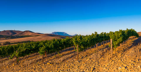 Atlantkyld Sauvignon blanc rullar in från Durbanville