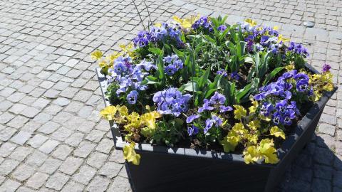 Vårplantering 6 RGB