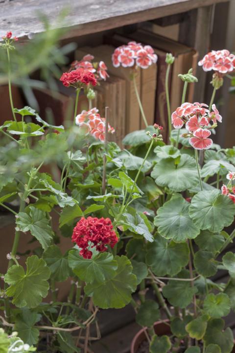 Stadsodlarens trädgård 4