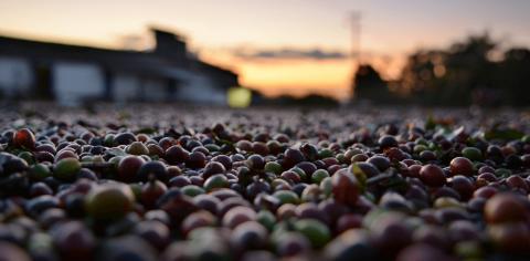 vilket-land-producerar-mest-kaffe_30 okt