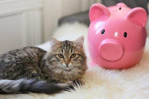 Dyreforsikring, katt