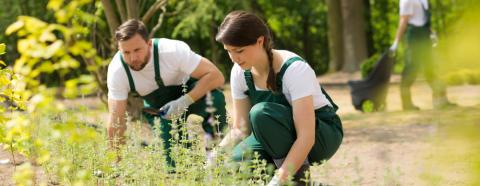 Plantagen lanserar ny tjänst för trädgårdshjälp