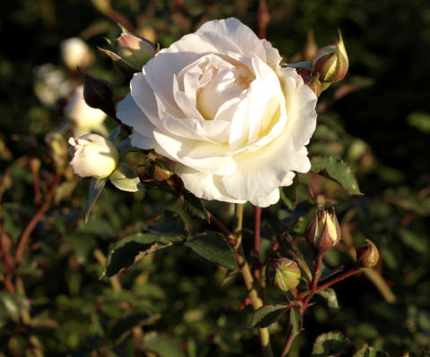 Vårens växtnyheter från Blomsterlandet