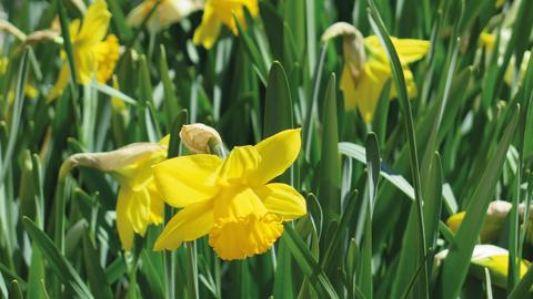 Vårplantering 2 CMYK