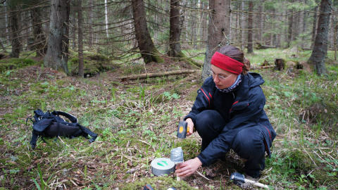 Här kan växter gömma sig från ett varmare klimat i skogen