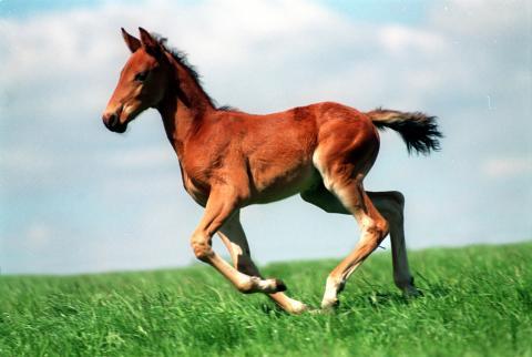 Politikerträff med hästnäringen