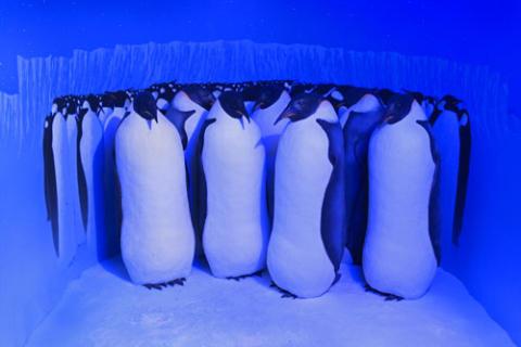 Polartrakterna - Kejsarpingviner