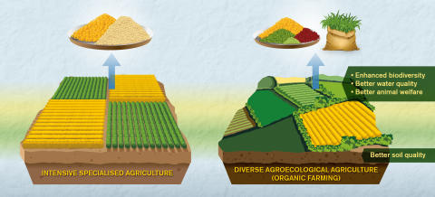 Comparisons between organic and conventional agriculture need to be better, say researchers