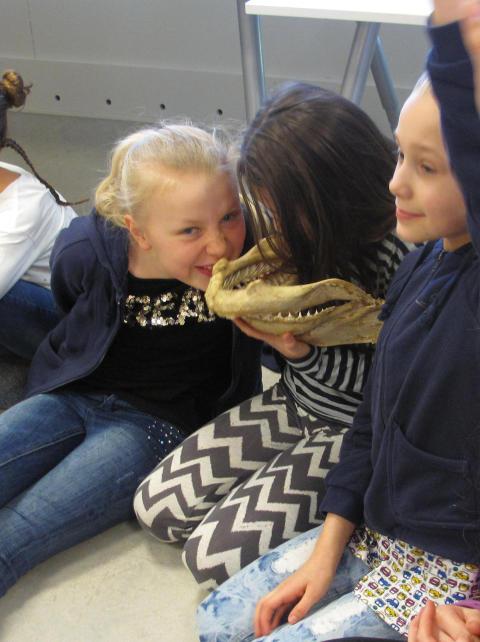 Stort intresse för att lära sig mer om hajar och rockor på Selma Lagerlöfs Torg