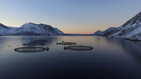 UN report states the need to replace meat with seafood to limit temperature rise to 1.5° C