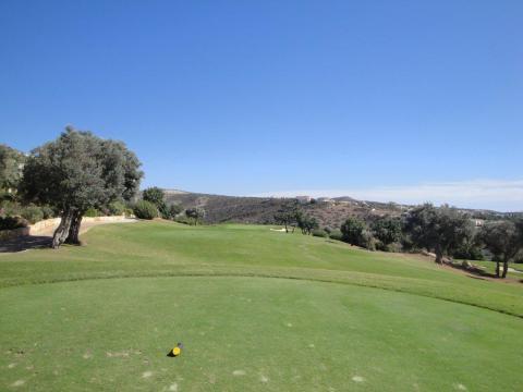 Golfia Kyproksella