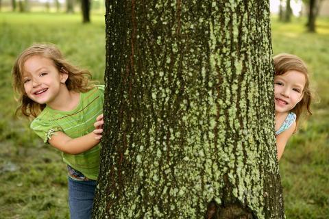 Publikum entscheidet über SAUBER-Waldpreis – Jeder kann seinen Favoriten online wählen