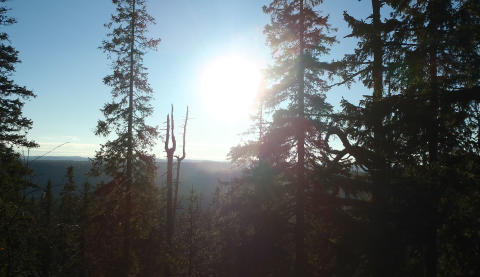 Seminarium 29 september: Nyckelbiotoper – hur går vi vidare?