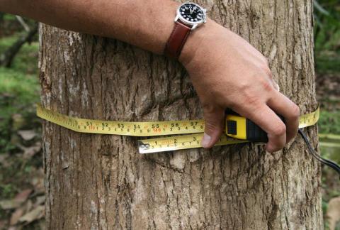 Holz: Als langfristiger Sachwert unschlagbar
