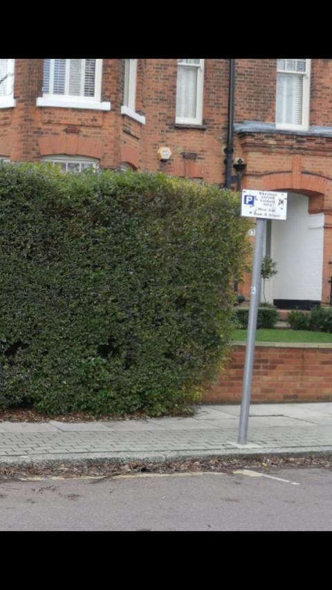 The hedge where Maureen's handbag was found