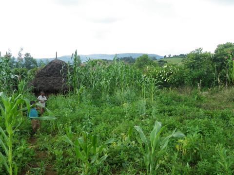 Hemträdgården är ett område där en familj bor och odlar till exempel grönsaker, frukt, säd och kaffe samt har sin boskap.