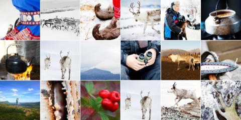 Bruker Instagram for å hylle reinsdyrnæringen: Jakter bilder og videoer fra folket