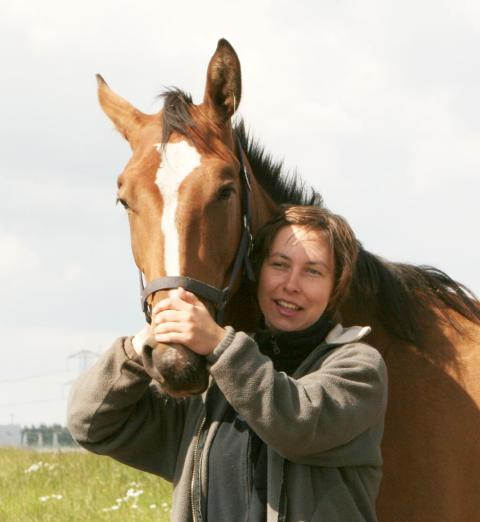 Överdriven skaderisk för hästar i grupp