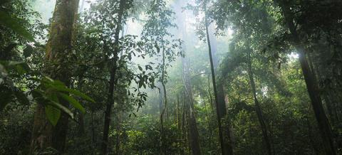 EU:s stora ansvar för tropisk avskogning visas i nya studier