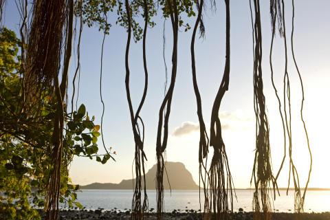 Mauritius_Le Morne_durch Banyan Tree gesehen©MTPA_Bamba