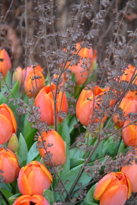Trädgårdens örter och perenner är fina i tulpanbuketten.