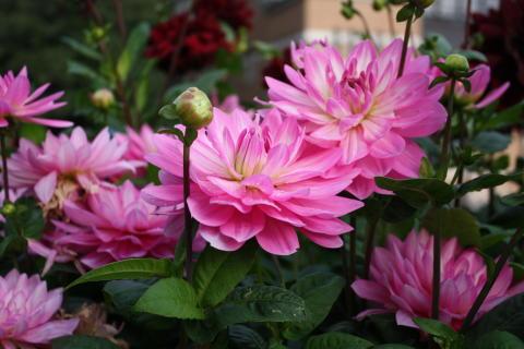 Blomsteröverraskning och utställning till Linnés ära
