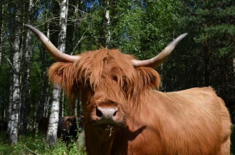 Kommunen erbjuder djurägare att skörda på kommunal mark
