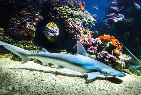 Aquaria bygger ny havsutställning