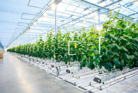 Global Greenhouse Equipments Market Global Industry Analysis, Size, Share, Growth, Trends and Forecast 2017 – 2022