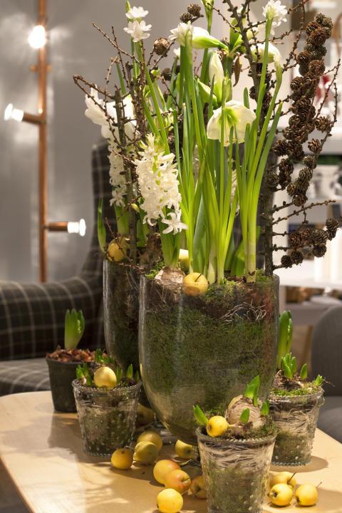 Samplanterade lökväxter