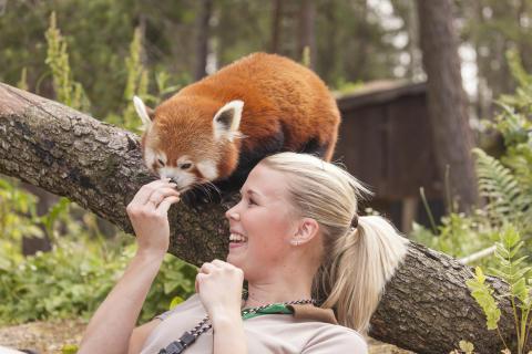 Kolmården är Nordens bästa djurpark!