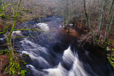 Ny rapport om skyddsvärda arter och vattendrag