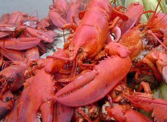 East Coast Seafood eyes new dawn in lobster price stability