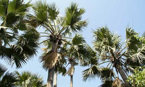 UD avråder från resor till Gambia – Så gäller din försäkring