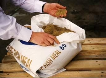 Tasa: Fishmeal prices to 'normalize'