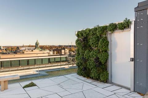 Biotopvägg högt upp i centrala Stockholm
