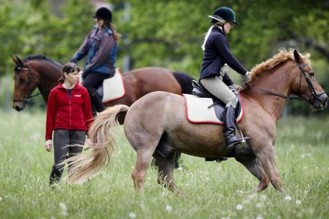 Ridsport - Hästen inspiration under arbetsdagen