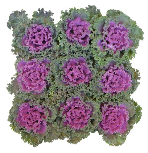 Prydnadskål - kvadrat i rosa