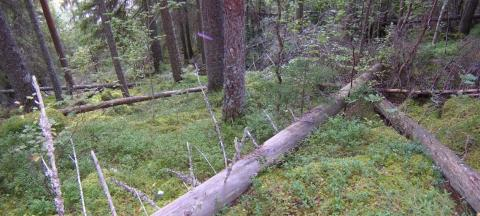 Länsstyrelsen bildar naturreservatet Stängslet i Rättvik