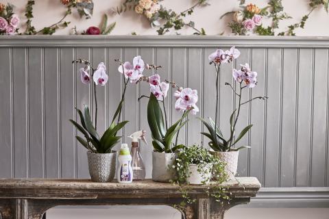 Romantisk lantidyll  - orkidé i kruka