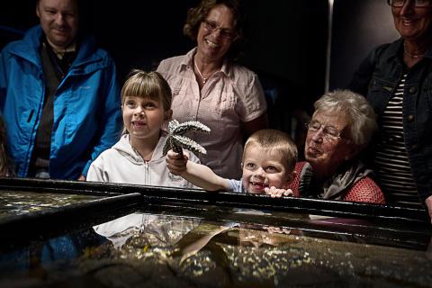 Sjöstjärna och besökare vid klappakvariet