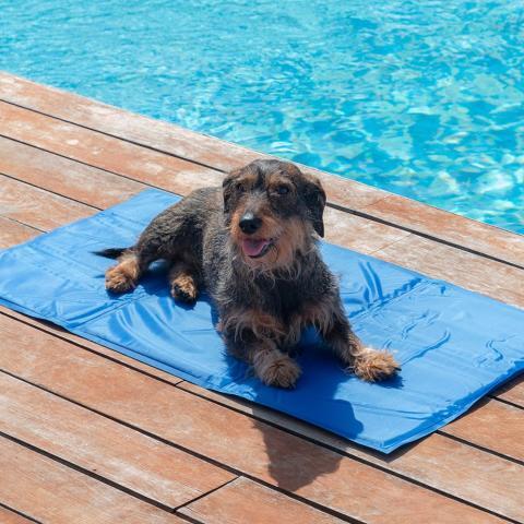 Kylmatta - Svalkande kyldyna för husdjur, 2