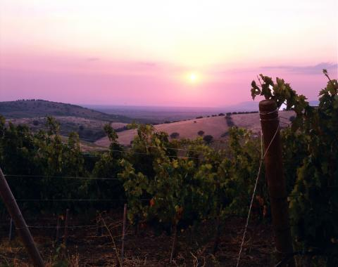 Belguardo vinstockar
