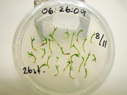 Överraskande upptäckt kan ge mer motståndskraftiga plantor